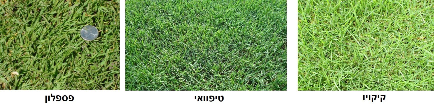 דשאים לשמש מלאה