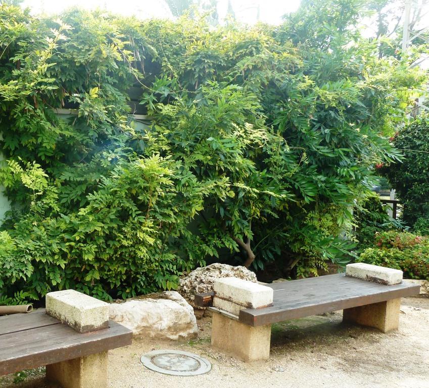 ויסטריה סינית בנובמבר מאחורי ספסל בגן היפני בחולון