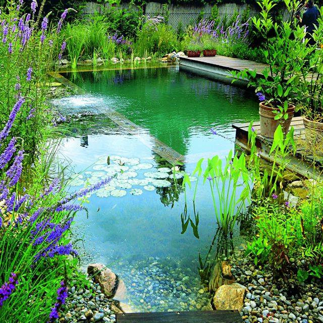 Askblooma Plants Info A Biotop Natural Swimming Pool